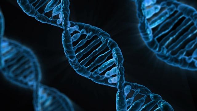 biologie - DNA