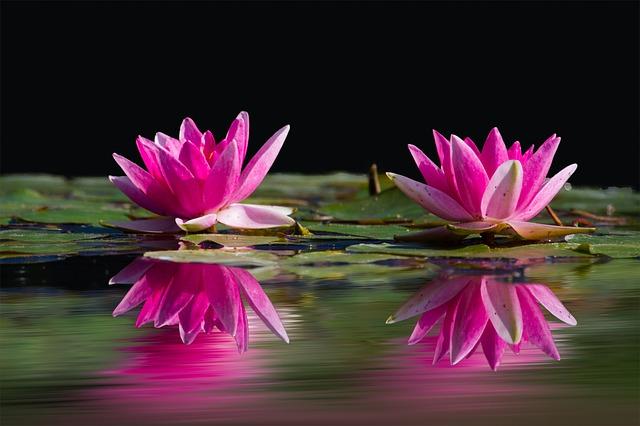 jezero s květy