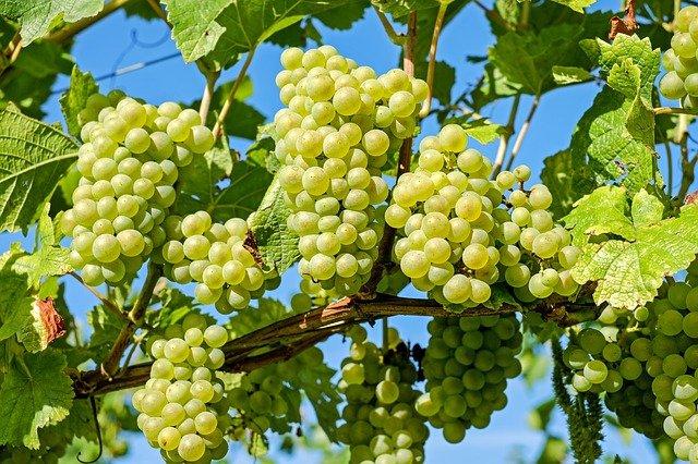 Tokajské víno